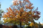autunno piccolo